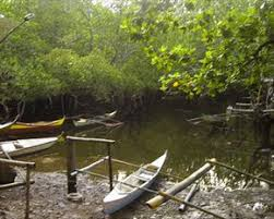 Beechwood Mangrove Forest