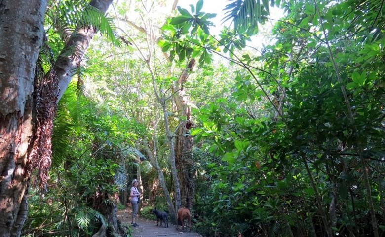 The Raffia Palm Forest, Mtunzini