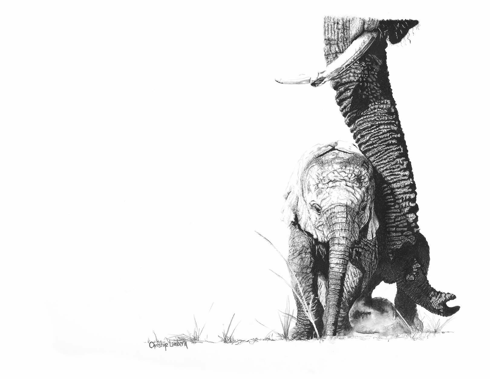 Christine Lamberth – Wildlife Artist