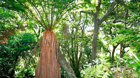 Springside Nature Reserve